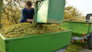 Kako do kvalitetne opreme za proizvodnju vina i rakije